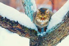 Cat sitting on the snowy tree Stock Photo