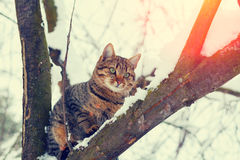 Cat sitting on a snowy tree Stock Photo