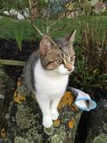 Cat sitting on stone. Domestic cat sitting on stone outdoors on sunny day Royalty Free Stock Image