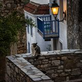 A cat sitting on a stone fence