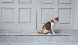 Cat sitting on stone steps front of door. Colorful of cat sitting on stone steps front of door Stock Photos
