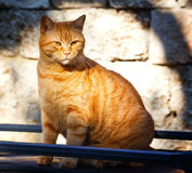 Cat sitting on a street. Big serious street ginger cat. Lonely cat on the street watching into nowhere. Street cat. Cat sitting on a street. Big serious street Stock Photo