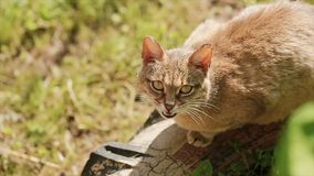 Cat sitting on the street on a bright sunny day.  stock video footage