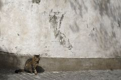 Cat sitting in street by an old wall Royalty Free Stock Photography