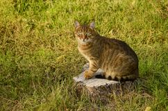 Cat sitting on the stump of a felled tree in the autumn afternoon Royalty Free Stock Photo
