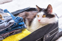 Cat sitting in the suitcase Royalty Free Stock Images