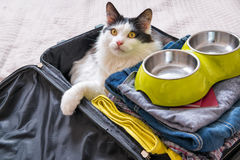 Cat sitting in the suitcase Royalty Free Stock Photography