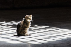 Cat Sitting in the Sun. A cat sits in the sunlight cast through a large grid window, that happens to be in the Hagia Sophia in Istanbul, Turkey Royalty Free Stock Images