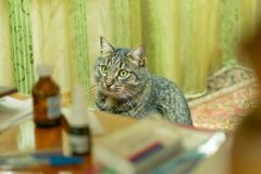 The cat is sitting at the table with medicine stock photos