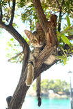 A Cat sitting on a tree Stock Image