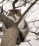 Cat is sitting on a tree Royalty Free Stock Photos