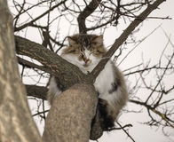 Cat is sitting on a tree Stock Images
