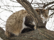 Cat is sitting on a tree Royalty Free Stock Photo