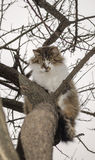 Cat is sitting on a tree Royalty Free Stock Image