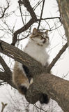 Cat is sitting on a tree Stock Photography