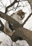 Cat is sitting on a tree Stock Photos