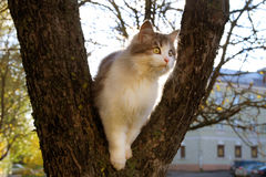 Cat Sitting on Tree in Autumn  at Sunny Day Stock Images