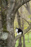 Cat sitting on a tree branch Royalty Free Stock Photos