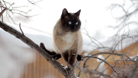 A Cat sitting on a tree stock footage
