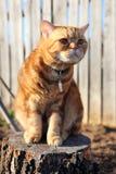 Cat sitting on a tree stump Stock Photo