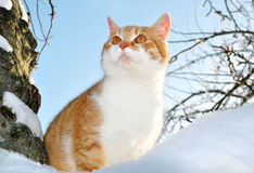 Cat sitting on a tree Royalty Free Stock Photography