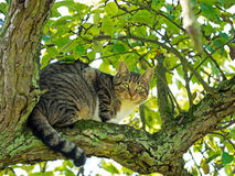 Cat sitting in tree Royalty Free Stock Photo