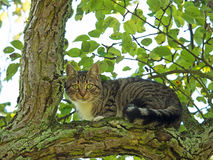 Cat sitting in tree Royalty Free Stock Image