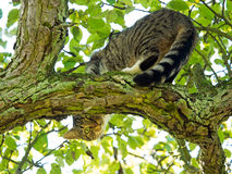 Cat sitting in tree Royalty Free Stock Photos