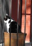 Cat Sitting in una piantatrice immagini stock libere da diritti