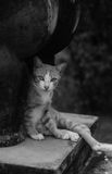 Cat sitting under stone statue. In black and white filter Royalty Free Stock Images