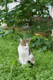Cat. Sitting under a tree spotted domestic cat in the city yard Royalty Free Stock Photos