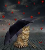 Cat under an umbrella and broken hearts royalty free stock photography