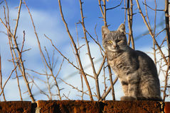 Cat sitting on wall. Gray cat sitting on brick wall over branches and blue sky Stock Images
