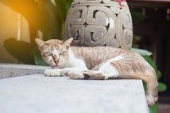 Cat Sitting On-Wegweise und -c$schauen stockbilder
