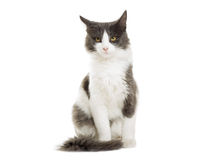 Cat sitting Royalty Free Stock Photos