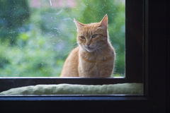 Cat sitting at window Stock Photos
