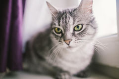Cat. Sitting on the window Royalty Free Stock Photography