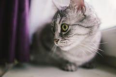 Cat. Sitting on the window Stock Photos