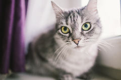 Cat. Sitting on the window Royalty Free Stock Images