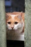 Cat sitting on a window. Beautiful cat sitting on a window Stock Photography