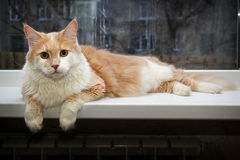 Cat sitting on a window. Beautiful cat sitting on a window Royalty Free Stock Photography