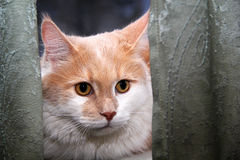 Cat sitting on a window. Beautiful cat sitting on a window Stock Images