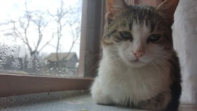 Cat sitting on window Royalty Free Stock Photos