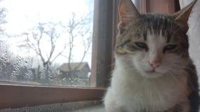 Cat sitting on window Stock Images