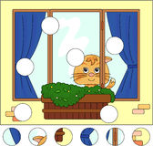 Cat sitting on the window with flower pots and curtains. Complet Royalty Free Stock Image