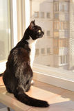 Cat sitting on a window ledge royalty free stock photo