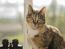 Cat Sitting in Window Looking at Camera with Bokeh Background Stock Images