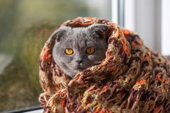 A thoroughbred crochet in a scarf looks out the window at the sun Royalty Free Stock Photos