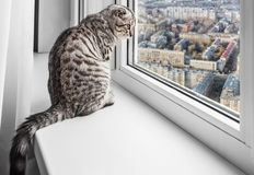 Cat sitting on a window sill and looking at the rainy city Royalty Free Stock Photography