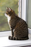 Cat  sitting on the window Stock Image